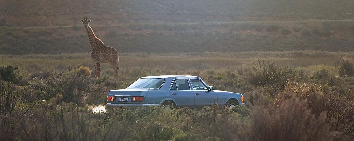 Mercedes-ul de safari: în căutarea verii