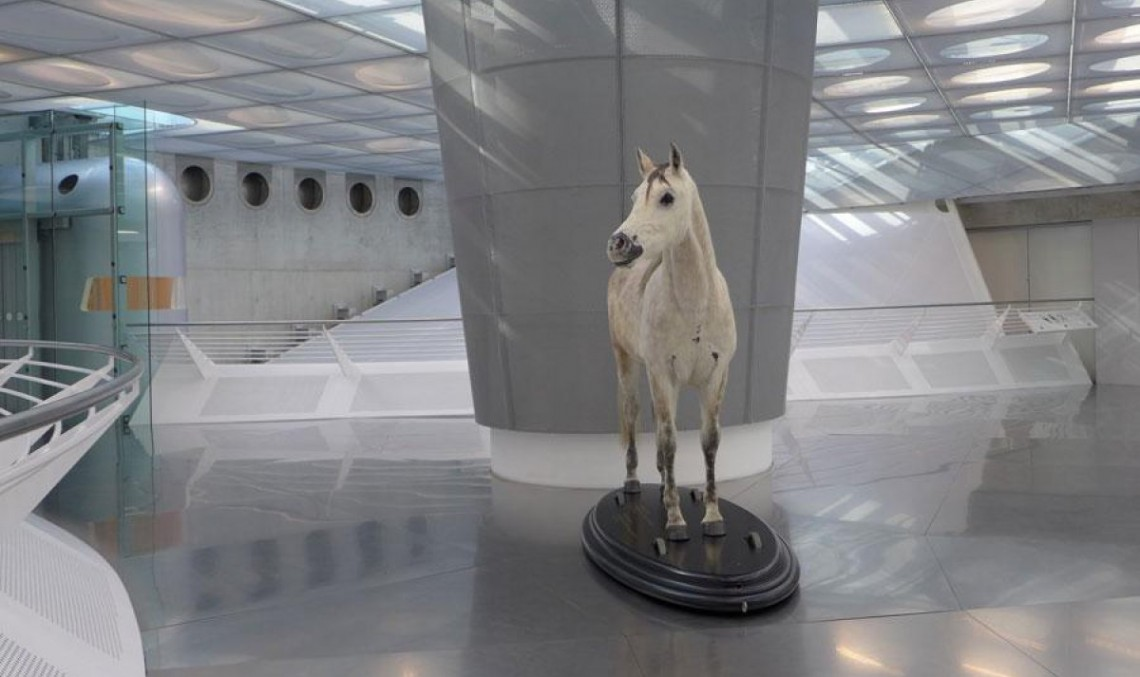 Calul fără nume