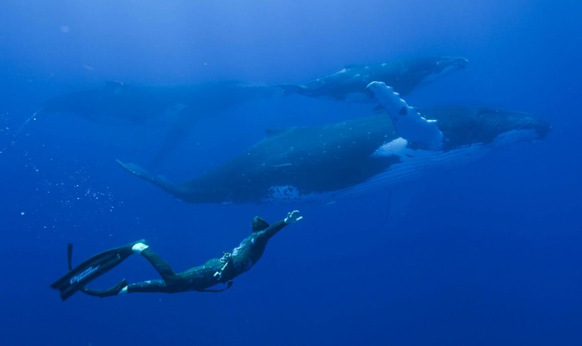 Aventura Mercedes-Benz – Față-n față cu balenele