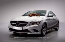 Mecanicii salvează o pisică blocată la motorul unui Mercedes-Benz CLA