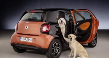 Smart fordogs: o surpriză pentru cel mai bun prieten al omului