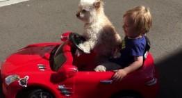 Un cățel drăgălaș e șoferul unui băiețel într-un super Mercedes SLS. Video amuzant