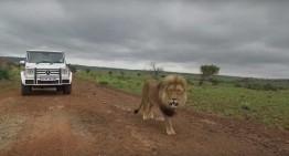 Mercedes-Benz G-Class – Sălbatic ca leii