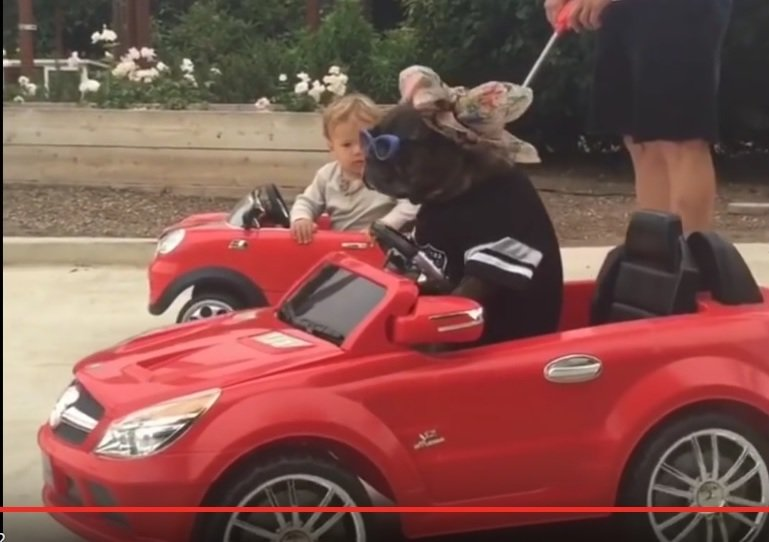 Video viral: un copil și un cățel conduc mini-decapotabile Mercedes