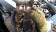 Mecanicul care miauna