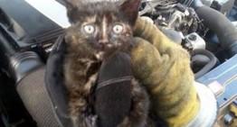 Mecanicul care miaună – O pisică a fost salvată din motorul unui Mercedes