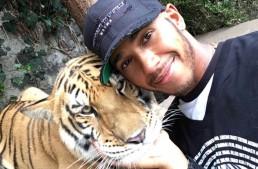 Lewis Hamilton sperie un tigru