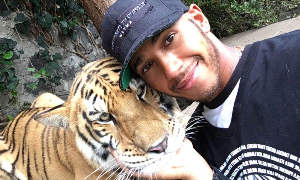 Nu și-a învățat lecția! – Lewis Hamilton confundă un tigru cu o pisică